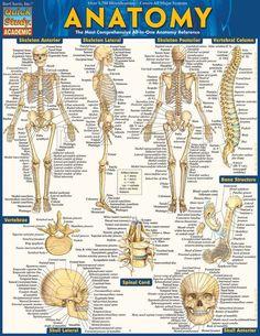 Anatomy (9781423222781)