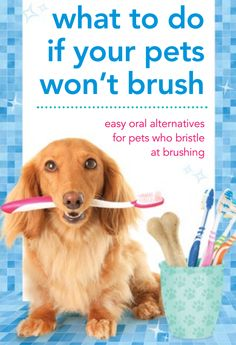 Can't brush your pet's teeth? Try these simple alternatives to help your hound maintain a healthy mouth