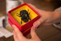 O Escaravelho do Diabo: livro vai virar filme