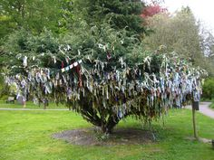 "Samye Ling Monastery - The ""cloutie tree"""