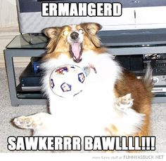 Ermahgerd Animals | dog animal playing ball ermahgerd soccer football funny pics pictures ...