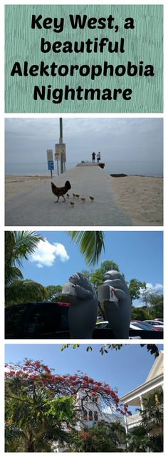 Do you have an all-consuming fear of chickens? You might want to leave Key West off the itinerary of any US tours you do. http://mrsfancypants.net/2016/05/29/alektorophobia-nightmare-key-west/