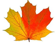 Fall Leaf Carving Project - An Advanced Wood Whittling Project for Kids