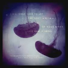 Image result for mary oliver images