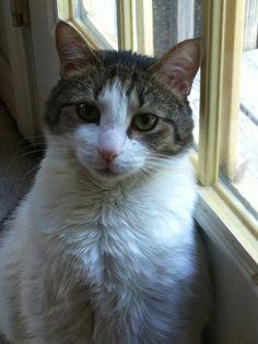 Caturday: My kitty family!