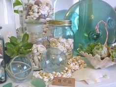 Beachcomber: Shells & Succulents