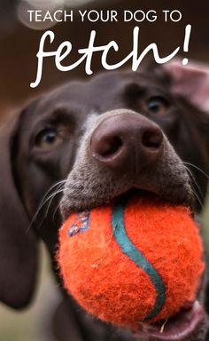 How To Teach Your Dog To Play Fetch | CANIDAE® Blog