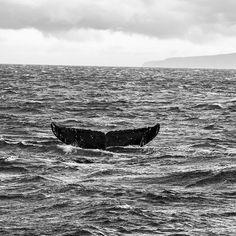 Im a photographer. Meghan Trainor, Whale, Animals, Whales, Animales, Animaux, Animal, Animais