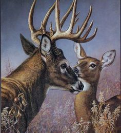 Whitetail Deer Pictures, Deer Photos, Realistic Animal Drawings, Deer Wallpaper, Drawing Scenery, Deer Drawing, Hunting Art, Deer Decor, Deer Art