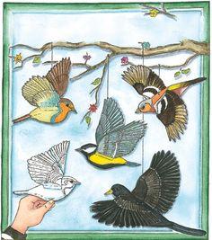 Singvögel - Natur | Labbé Onlineshop