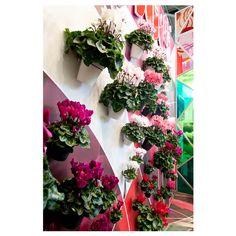 Beurs Hortifair Schoneveld Breeding (foto: Kees Muizelaar) ©schoneveldbreeding #eventstyling #styling #floral #horticultural #projectmanager #production #oncommission #creatievelin #lindabruinenberg #lindagoris #freelancer #available #design #corporateidentity #artwork #logo #logos #illustration Brainstorm, Event Styling, Art Director, Floral Wreath, Behance, Wreaths, Logos, Artwork, Design