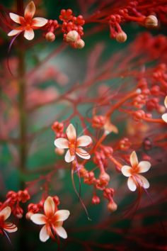 244 Best Flowers Images Beautiful Flowers Exotic Flowers