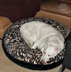 Luxury Pet Bed from Baylee Nasco Giveaway | Sweep Tight