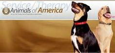 """Service/Therapy Dogs for PTSD! Petting a dog stimulates the release of the hormone Oxytocin - THE CALMING HORMONE. Since my Dr recommended a THEREAPY dog, I am no longer """"Hypervigilant"""". My FUR-BABIES take care of that FOR ME! sjw"""