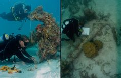 Underwater Archaeology Marine Archaeology, Dry Tortugas, Underwater City, Good Old Times, Shipwreck, Zoology, Marine Life, Prehistoric, Scuba Diving