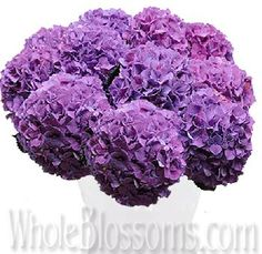 Lavender Hydrangea Dutch Flower Whole Blossoms Available year round