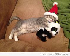Christmas kitten  *
