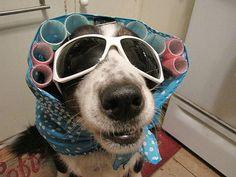 62 of the best halloween dog costumes - Dog Halloween Ideas