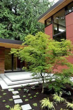 érable du Japon et herbe de Japon dasn le jardin moderne