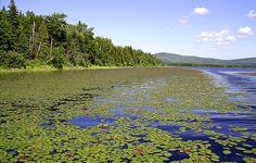 Le lac des Joncs Une partie cachée du Lac-Mégantic River, Mountains, Nature, Outdoor, City, Outdoors, Rivers, Nature Illustration, The Great Outdoors