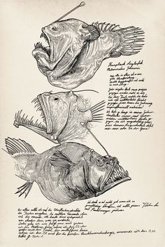 Humpback Anglerfish (Melanocetus johnsonii) For practice some crosshatch technics, i started to draw some deep sea fishes almost every day. ...