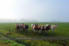 Landschappen in de mist rond Apeldoorn
