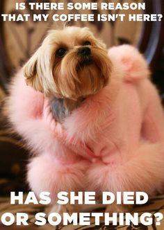 "If ""The Devil Wears Prada"" Movie Starred Stylish Dogs"