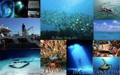 DIVE OCEANS | Discover Scuba Diving of Rottnest Island Boat