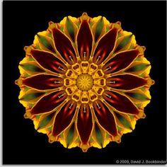 ⊰❁⊱ Mandala ⊰❁⊱ Flor #Mandala