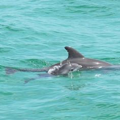 Baby swimming with Mom..