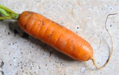 Good article on how to grow great carrots