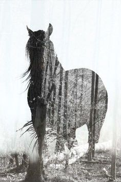Horse Double Exposure Edit made my me