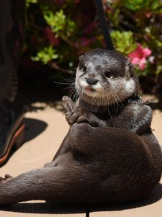 Is this a good otter pose?