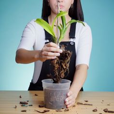Best 10 Learn how to make your own Kokedama with our how to steps Kokedama DIYproject GardenProject GardenGateMagazine – SkillOfKing. Indoor Orchids, Orchids Garden, Orchid Plants, Garden Plants, Garden Web, Balcony Garden, Growing Orchids, Growing Plants, Orchid Care