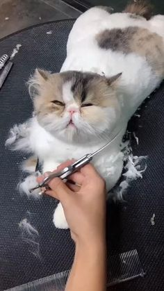 Dare To Move? Funny Cute Cats, Cute Baby Cats, Cute Kitten Gif, Cute Little Animals, Cute Cats And Kittens, Cute Funny Animals, Kittens Cutest, Big Cats, Cute Animal Videos