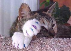 Pussy cat cute nail,, awawawwawa