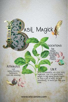 Witchcraft Herbs, Witchcraft Spell Books, Green Witchcraft, Magic Herbs, Herbal Magic, Nature Witch, Witch Spell Book, Grimoire Book, Witch Herbs