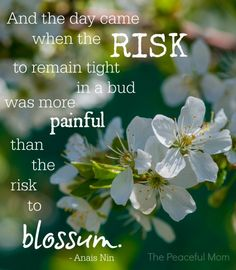 Take the Risk to Blossum: 3 ideas that are changing my life - The Peaceful Mom
