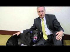 Owners face hard choice when dog diagnosed with cancer - WATCH THE VIDEO.    *** how to diagnose cancer in dogs ***   Owner Steven Swann talks about the tough choice he and his wife faced when their 11-year-old black Labrador retriever, Koufax, was diagnosed with cancer. Read more about their decision in Eve Samples' column here:  Video credits to the YouTube...