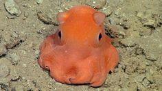 cute-octopus-620