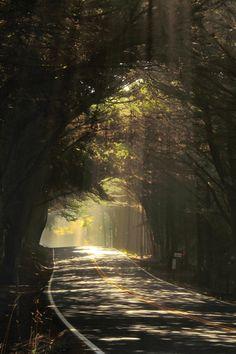 mystic-revelations:  Magic tunnel By bun lee