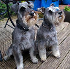 Alfie & Louie