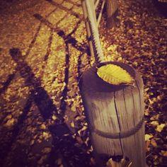 가을이구만