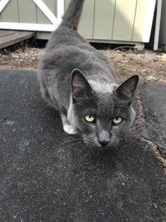 1389 best found cats ct images found cat losing a pet cat rh pinterest com