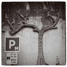 On a wall in the city Redon in France there where trees from concrete or cement with a lot of birds in it. (and yes, it was aside a parking place)