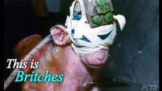 Britches' Story: Eyes Sewn Shut