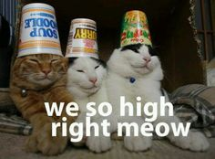 We so high right meow / funny pictures :: stoner-humor :: high :: cats / funny pictures & best jokes: comics, images, video, humor, gif animation - i lol'd I Love Cats, Cute Cats, Funny Cats, Funny Animals, Cute Animals, Silly Cats, Party Animals, Funniest Animals, Stupid Cat