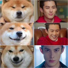 Yueyue said that Didi looks like a puppy. Here's the evidence Meteor Garden Cast, Meteor Garden 2018, Los F4, Gardening Memes, Kdrama, F4 Boys Over Flowers, Handsome Korean Actors, Tom Ellis, Asian Actors