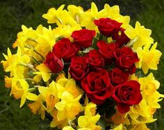 Red roses and daffodils via Colorfull at www.Facebook.com/Colorfullss