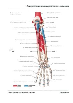 Книга Атлас анатомии человека Неттер Ф. - Читать онлайн - Online библиотека padaread.com